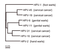 hpv subtypes that cause cancer