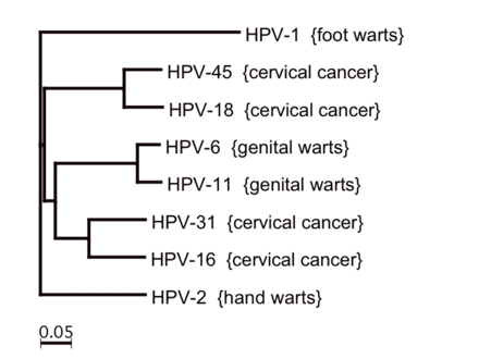 hpv type 16 cause warts