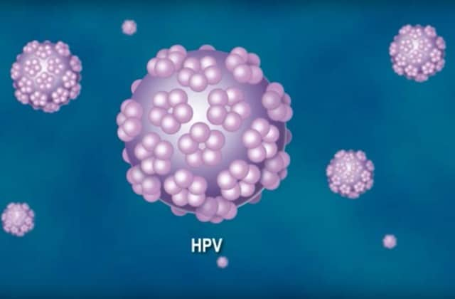 hpv high risk positive means