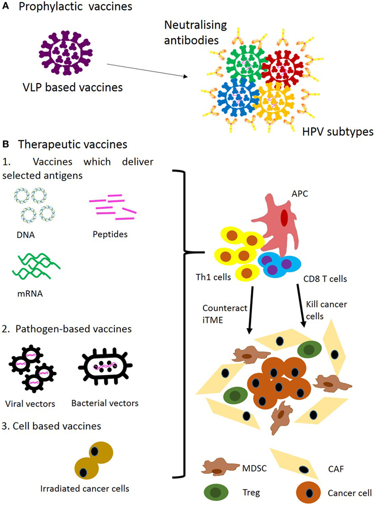 esophageal cancer and hpv virus