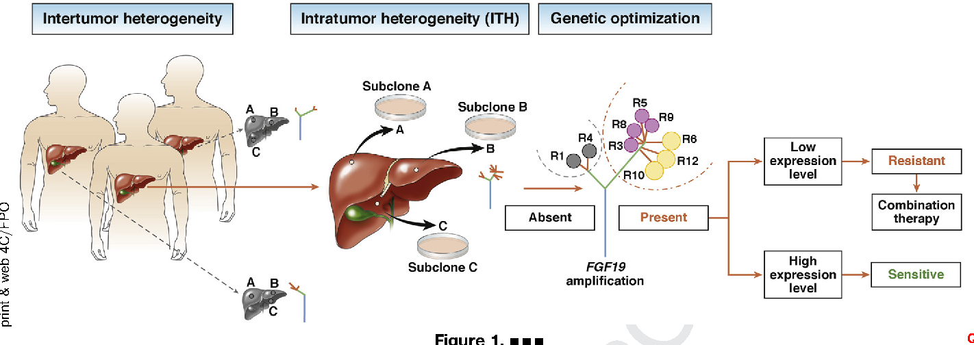 The gene therapy conditioned by nanotechnology in hepatocarcinoma , NANOGEN - INCDO INOE ICIA