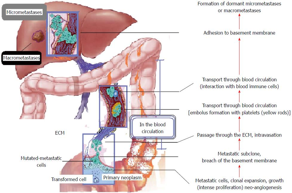 MALIGNANT TUMORS OF DIGESTIVE ORGANS AND LIVER METASTASES AT THE TIME OF DIAGNOSIS