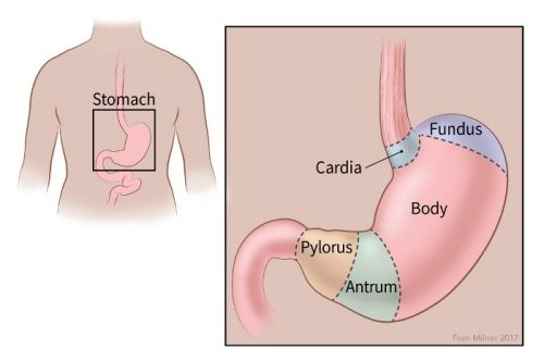 cancer of gastric cardia