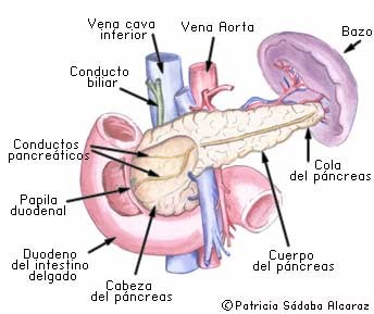 cancer de pancreas y biodescodificacion