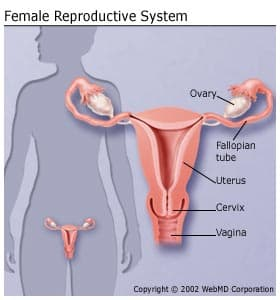 cancer of uterine