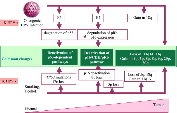 treatment for hpv positive head and neck cancer