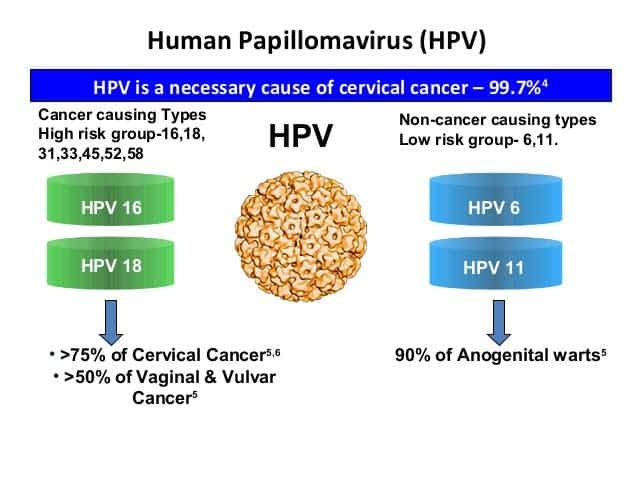 what are the types of hpv that cause cervical cancer